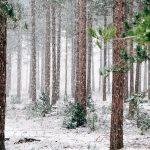 Ali nas na Štajerskem čaka sneg?